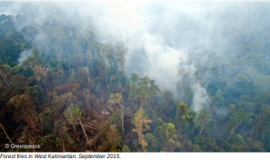 Greenpeace: Bosbranden op West Kalimantan (sept. 2015)