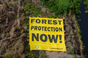 160303-GP-Forest_protection_NOW-banner