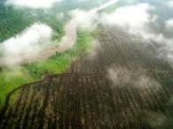 Photographs taken by Greenpeace paramotors as they launch an ongoing aerial initiative to spot forest and peat fires in an oil palm plantation.